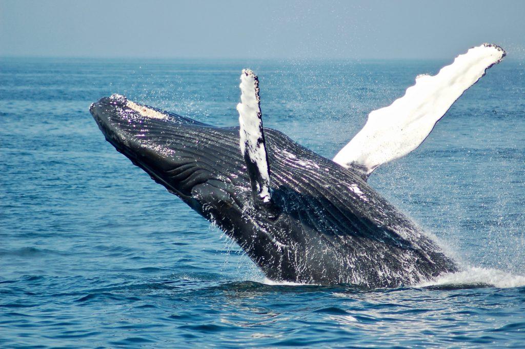 Kapstadt Urlaub - Hermanus Wale