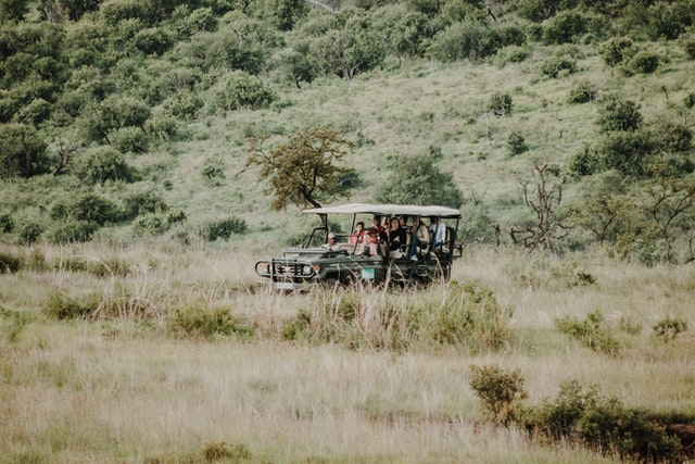 Südafrika Rundreise - Safari
