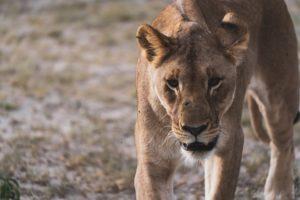 Namibia Rundreise - Etosha